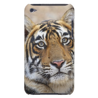 Portrait of Royal Bengal Tiger, Ranthambhor Barely There iPod Covers