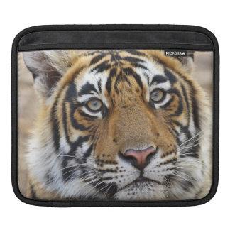 Portrait of Royal Bengal Tiger, Ranthambhor iPad Sleeve