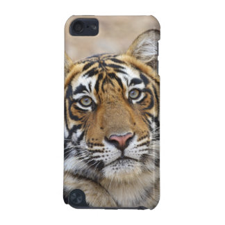 Portrait of Royal Bengal Tiger, Ranthambhor iPod Touch 5G Cases