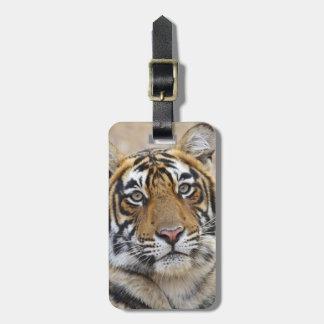 Portrait of Royal Bengal Tiger, Ranthambhor Luggage Tag