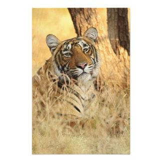 Portrait of Royal Bengal Tiger, Ranthambhor Photo Print