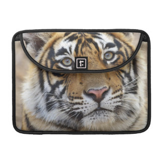 Portrait of Royal Bengal Tiger, Ranthambhor Sleeve For MacBooks