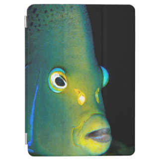 Portrait Of Semicircle Angelfish, Sodwana Bay iPad Air Cover