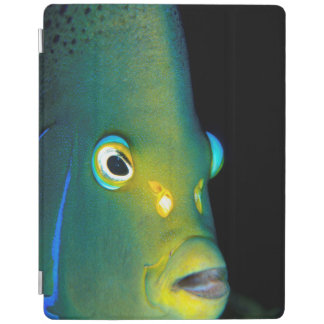 Portrait Of Semicircle Angelfish, Sodwana Bay iPad Cover