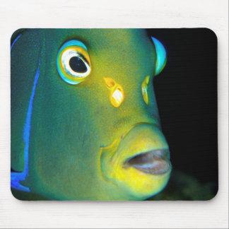 Portrait Of Semicircle Angelfish, Sodwana Bay Mouse Pad