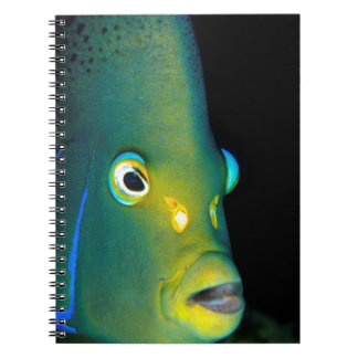 Portrait Of Semicircle Angelfish, Sodwana Bay Spiral Notebook