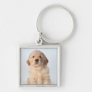 Portrait of six week old golden retriever puppy. Silver-Colored square key ring