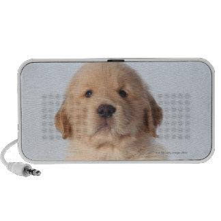 Portrait of six week old golden retriever puppy. iPod speakers