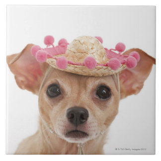 Portrait of small dog in sombrero tile