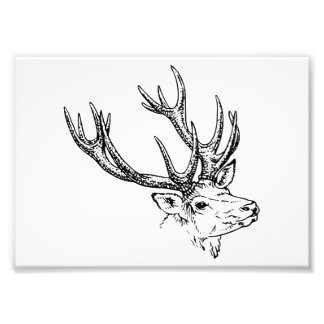 Portrait of Stag Deer Photograph