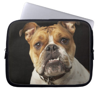 Portrait of tan and white bulldog with collar laptop sleeve