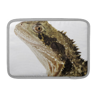 Portrait of this arboreal agamid species native MacBook sleeve