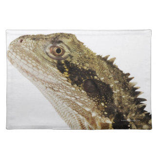 Portrait of this arboreal agamid species native placemat