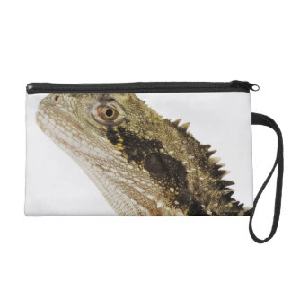 Portrait of this arboreal agamid species native wristlet