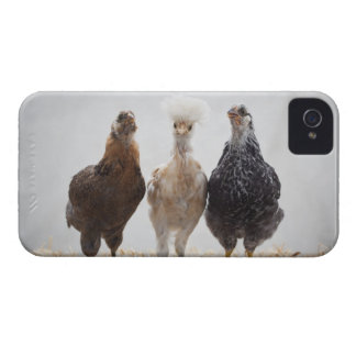 Portrait of Three Pet Chickens Looking Forward Case-Mate iPhone 4 Case