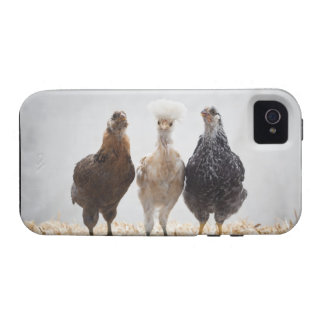 Portrait of Three Pet Chickens Looking Forward Vibe iPhone 4 Case