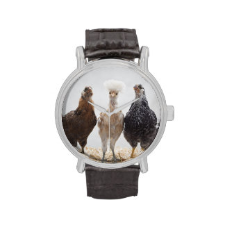 Portrait of Three Pet Chickens Looking Forward Wrist Watch