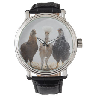 Portrait of Three Pet Chickens Looking Forward Wrist Watch
