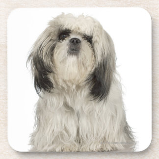 Portrait of Tibetan Terrier puppy Coaster