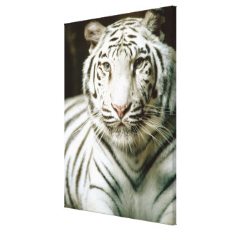 Portrait of tiger canvas print