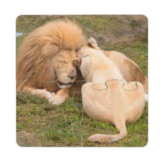 Portrait of Timbavati White lion male and female