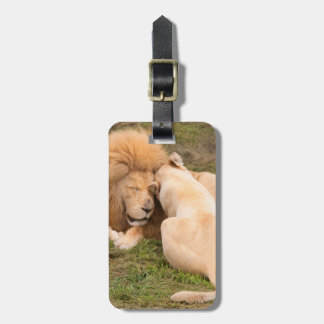 Portrait of Timbavati White lion male and female Bag Tags
