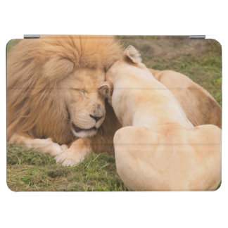 Portrait of Timbavati White lion male and female iPad Air Cover