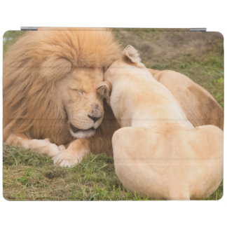Portrait of Timbavati White lion male and female iPad Cover