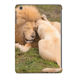 Portrait of Timbavati White lion male and female iPad Mini Cover
