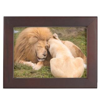 Portrait of Timbavati White lion male and female Keepsake Box