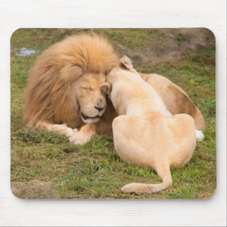 Portrait of Timbavati White lion male and female Mouse Pad