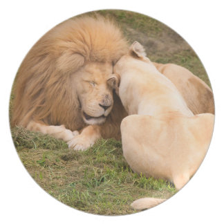 Portrait of Timbavati White lion male and female Plate