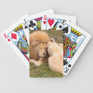 Portrait of Timbavati White lion male and female Poker Cards