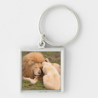 Portrait of Timbavati White lion male and female Silver-Colored Square Key Ring