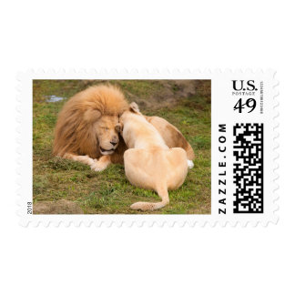 Portrait of Timbavati White lion male and female Stamps