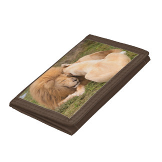 Portrait of Timbavati White lion male and female Tri-fold Wallet