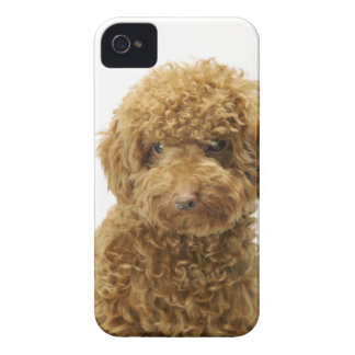 Portrait of Toy Poodle iPhone 4 Case