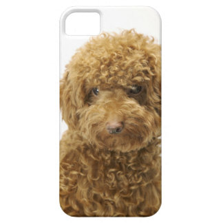 Portrait of Toy Poodle iPhone 5 Cover