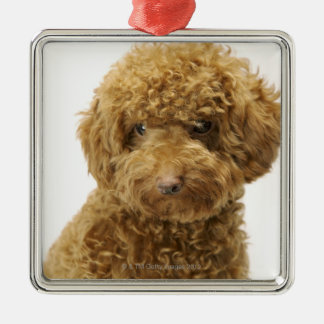 Portrait of Toy Poodle Silver-Colored Square Decoration