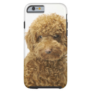 Portrait of Toy Poodle Tough iPhone 6 Case