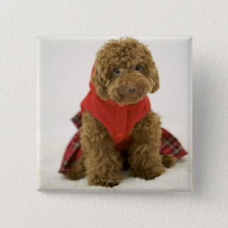 Portrait of Toy Poodle wearing cloth sitting 15 Cm Square Badge