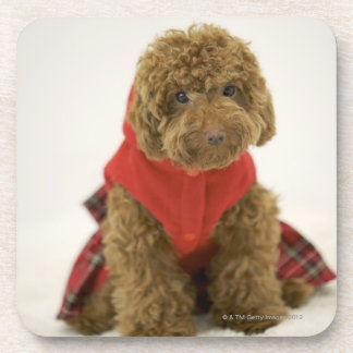 Portrait of Toy Poodle wearing cloth sitting Coaster