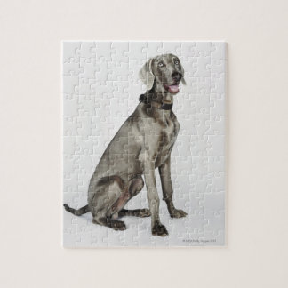 Portrait of Weimaraner dog Jigsaw Puzzle