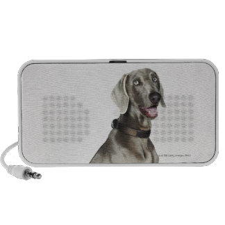 Portrait of Weimaraner dog Mp3 Speakers