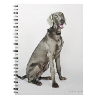 Portrait of Weimaraner dog Spiral Notebook