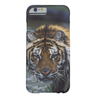 Portrait Of Wet Siberian Tiger Barely There iPhone 6 Case