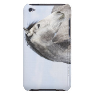 portrait of white horse 2 barely there iPod cases