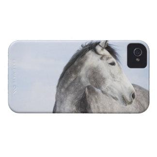 portrait of white horse 2 iPhone 4 Case-Mate cases