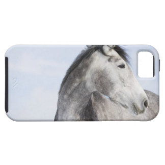 portrait of white horse 2 iPhone 5 cover