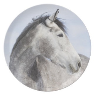 portrait of white horse 2 plate
